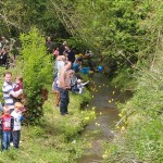 A duck race in progress