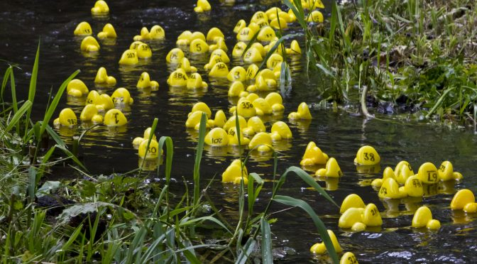 Storrington Village Duck Race – 7th May 2017 from 12 noon to 2:30pm