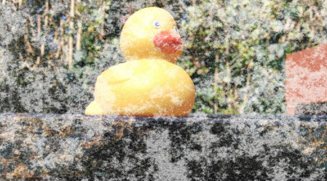 Brrrrr, have you bought your ducks yet?